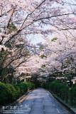 kyoto_199.jpg