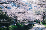 kyoto_205.jpg