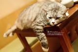 貓貓狗勾花花草草