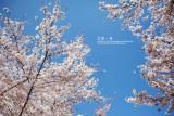 kyoto_006.jpg