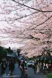 kyoto_027.jpg