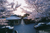 kyoto_028.jpg