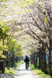 kyoto_048.jpg