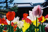 kyoto_049.jpg