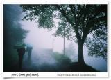 阿里山•迷霧