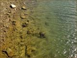 Rocks Water Low Tide.jpg