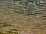 Sea Weed Water Low Tide.jpg