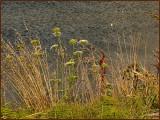 Weeds Over Water.jpg