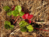 Weeds in Dry Grass.jpg