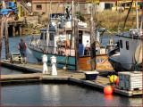 WB Fish Boat Sleep Robber.jpg