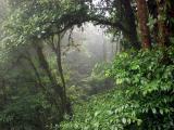 P7101202-CloudForest.jpg