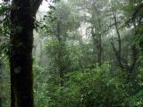 P7101212-CloudForest.jpg