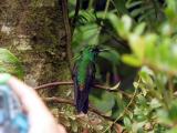 P7101276-Hummingbird1.JPG