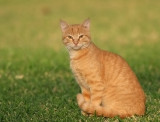 IMG_0804.8.12-Hotel-cat.jpg
