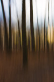 Forest Abstracts