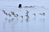 Birds & Bather