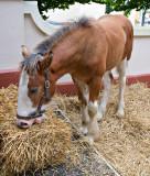 Horse Snack