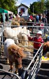 Livestock + Minder