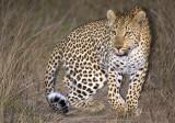 Female Night Hunting 2