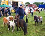 Killorglin Fair
