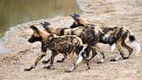 Pups at waterhole