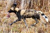 Wild Dog Pup - Food Fight