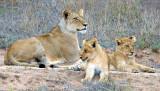 Female + Cubs