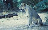 Samburu Female in Shade