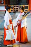 Shinto Miko (巫女 Shrine Maidens)