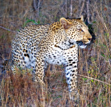 Female Night Hunting