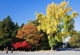 Autumn, Kyoto