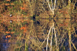 Shannon River Reflections