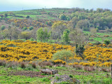Clare Countryside