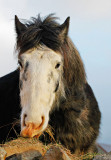 09-Feb-09 ... Hungry Horse
