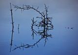 Burren Reflections
