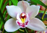 Wynette's Kitchen Orchid