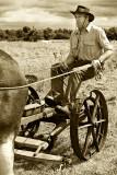 Horsedrawn Mower