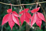 Autumn Lineout