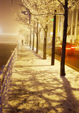 Freezing Fog 3