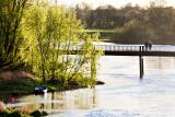 Spring Evening - Black Bridge