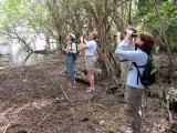 Birding on the Limpkin trail