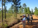 Mountain Pine Ridge Birding