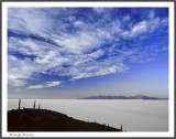 BOLIVIA - SALAR DE UYUNI - ISLA DE INCAHUASI