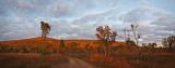 Leopold Ranges at sunrise Panorama