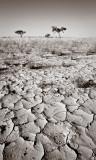 Cracks in the Desert