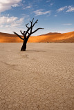 Solitary Twisted Tree at Deadvlei