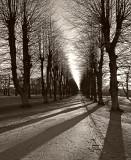 Søndermarken shadows