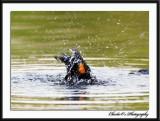 RWBB taking a bath...