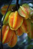 Starfruits in Wohlhusen