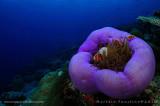 Dive in Malasia